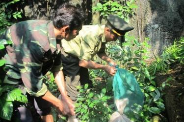 Thả động vật rừng về môi trường tự nhiên